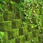 Tips Menghilangkan Lumut Pada Dinding Rumah