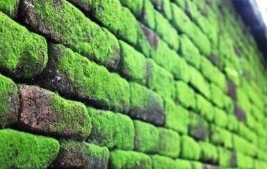 Jangan Biarkan Tembok Berlumut