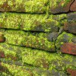 Ini Cara Basmi Jamur Dan Lumut di Dinding Bata Rumah