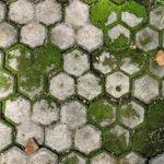 Trik Basmi Lumut Pada Paving Block
