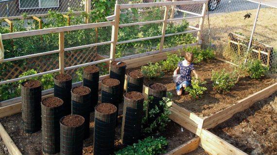 Cara Membuat Kebun Sayur Sederhana Di Rumah