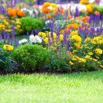 5 Jenis Tanaman Untuk Taman Depan Rumah