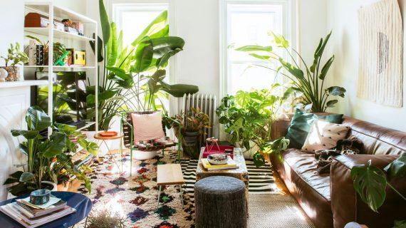 Berkebun Bisa Menjadi Hobi Yang Menyenangkan Dan Membuat Tampilan Rumah Semakin Cantik