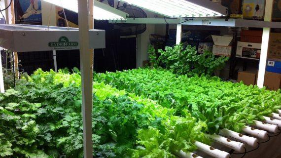 Memanfaatkan Bagian Atap Rumah Sebagai Kebun
