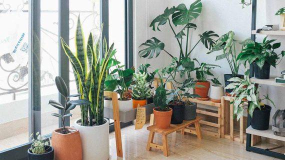 4 Manfaat Besar Menaruh Tanaman Hijau Di Dalam Rumah