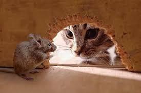 Cara Mengusir Tikus Di Rumah Paling Ampuh