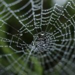 Cara Membersihkan Sarang Laba-laba Di Rumah
